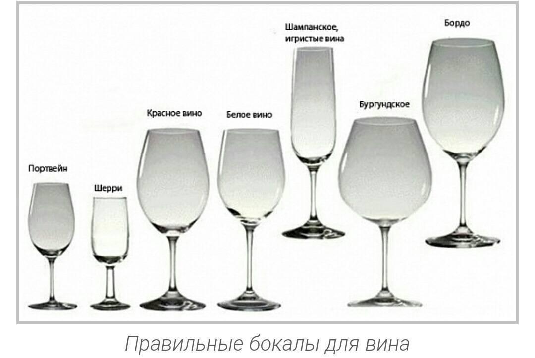 Бокалы для вина: виды, типы, отличия для белого и красного вина