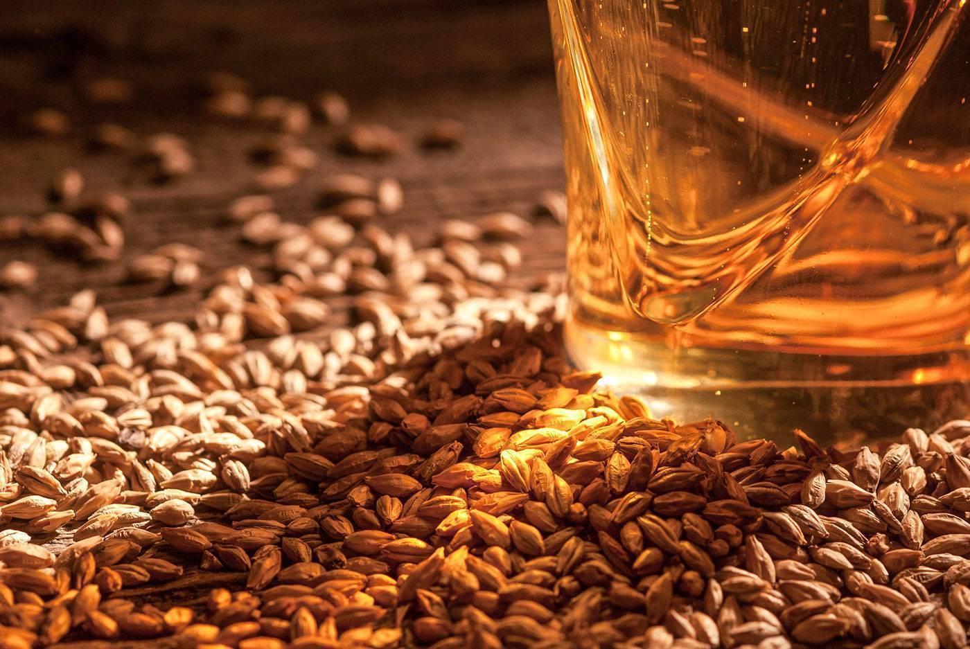 Солод: как выглядит и где взять, сферы применения и сорта, изготовление хлеба и пива на основе ячменных зерен