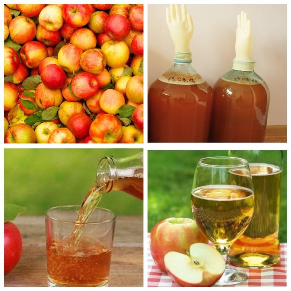 Как приготовить яблочный сидр в домашних условиях?