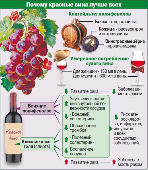 Безалкогольное вино - состав, технология деалкоголизации, полезные и вредные свойства