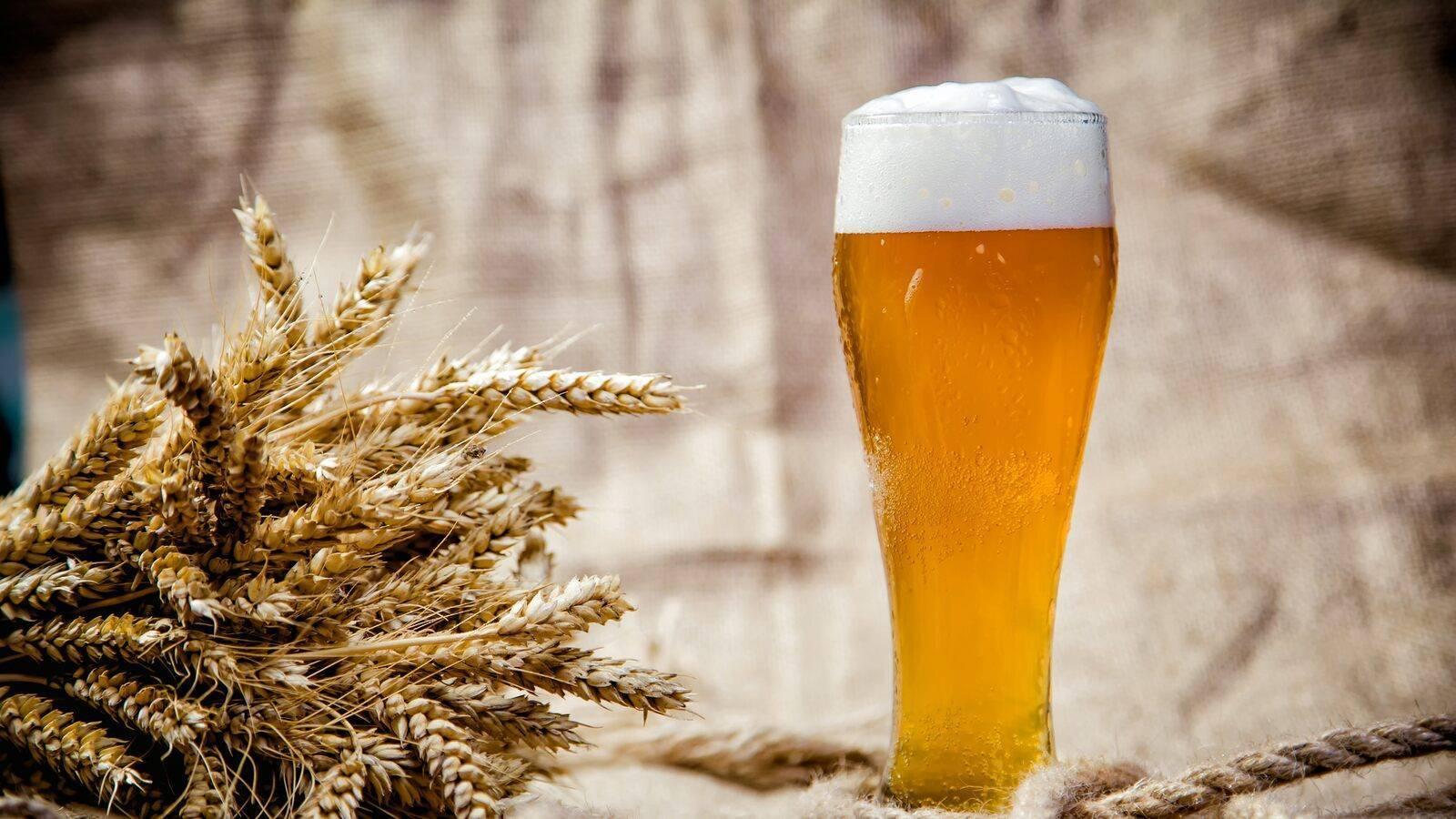 Пшеничное пиво: рецепты приготовления в домашних условиях