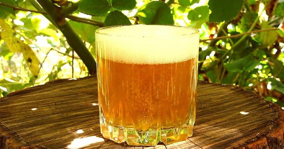 Яблочный сидр: рецепт приготовления напитка в домашних условиях, рецепт с чистыми культурами дрожжей