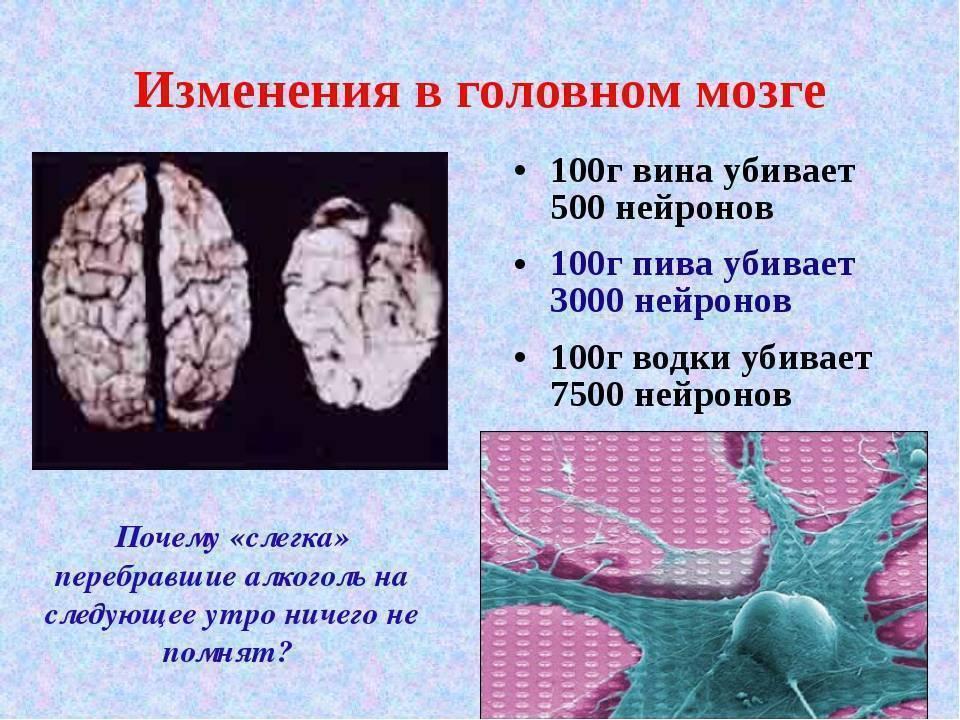 Влияние алкоголя на мозг человека: на нервную систему, убивает клетки мозга