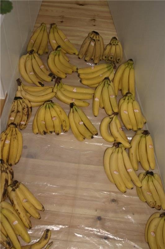 Брага из бананов — тонкости изготовления!