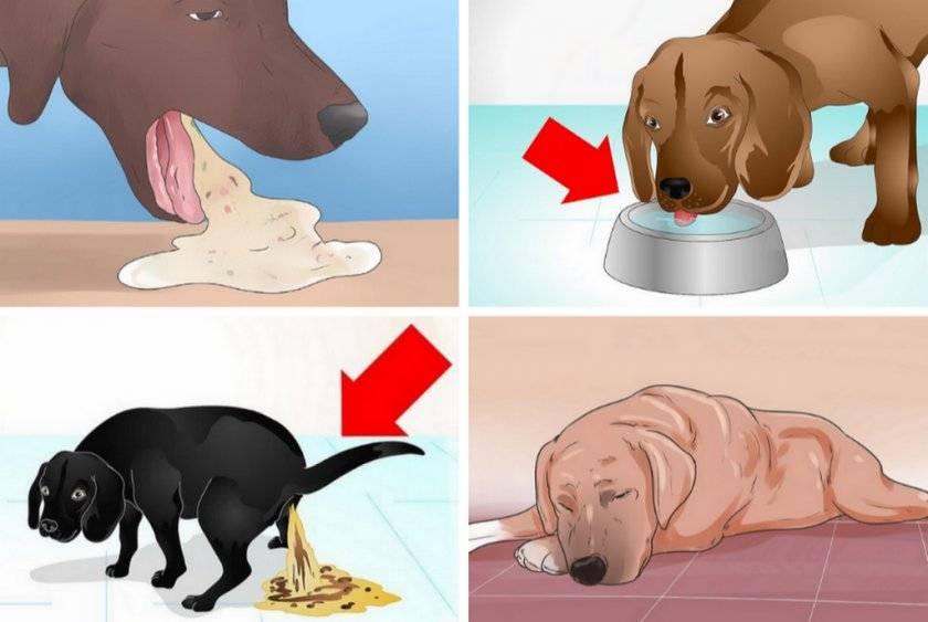 Рвота у собак - виды, первая помощь, лечение