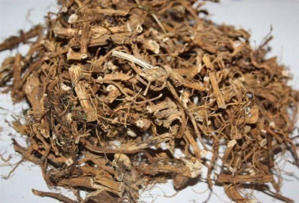 Калган корень лечебные свойства и противопоказания, отзывы