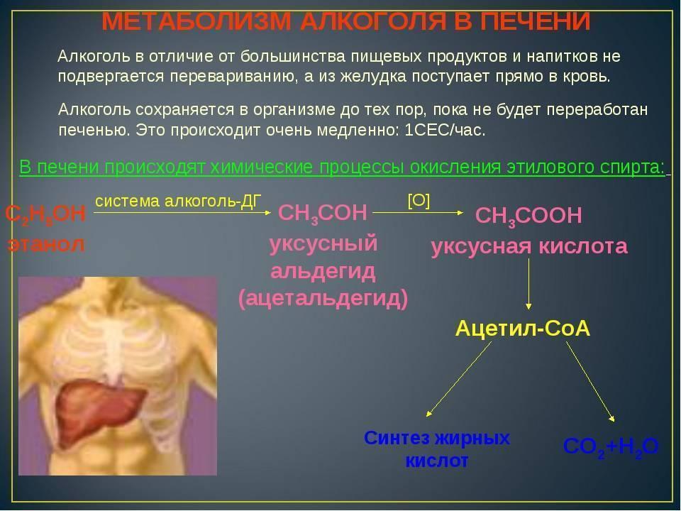 Эндогенный алкоголь в организме в норме определяется в количестве. эндогенный алкоголь