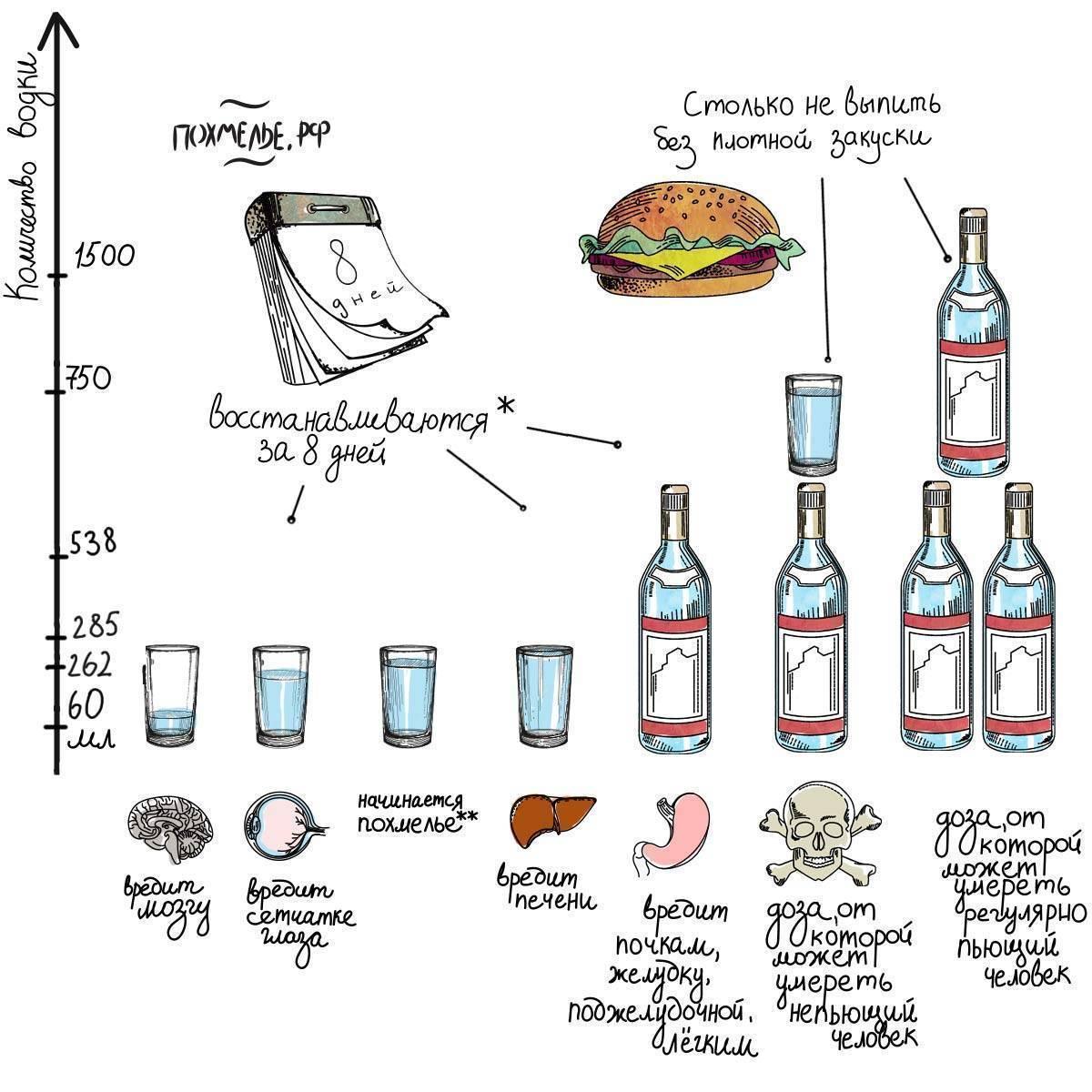 Сколько можно выпить водки без вреда для здоровья: безопасная доза для мужчин и женщин