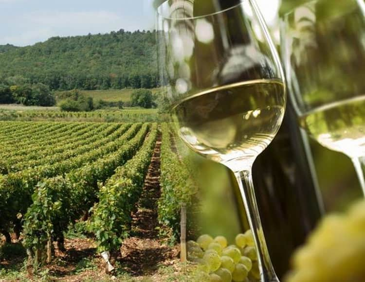 Розовое вино прованса la provence