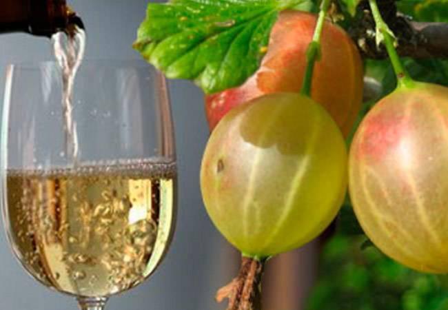 Домашнее вино из зеленого крыжовника - пошаговый рецепт