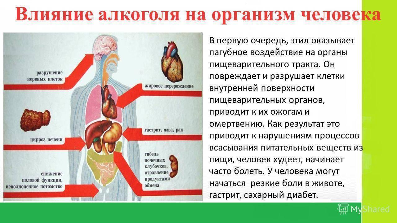 Как замедлить метаболизм (обмен веществ)?