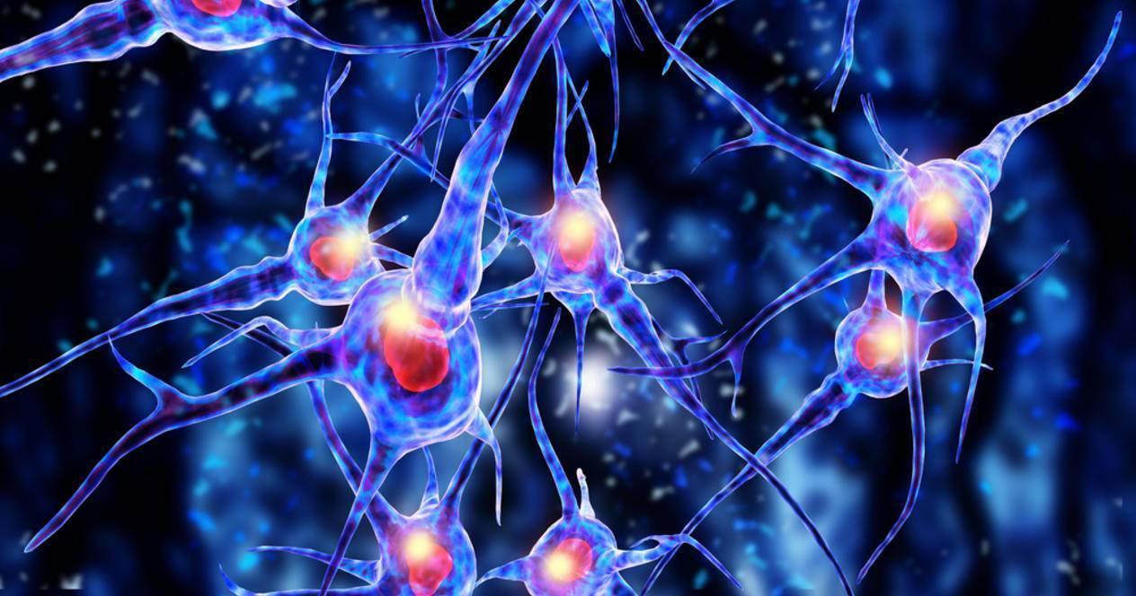 Нервные клетки мозга: восстанавливаются ли они?