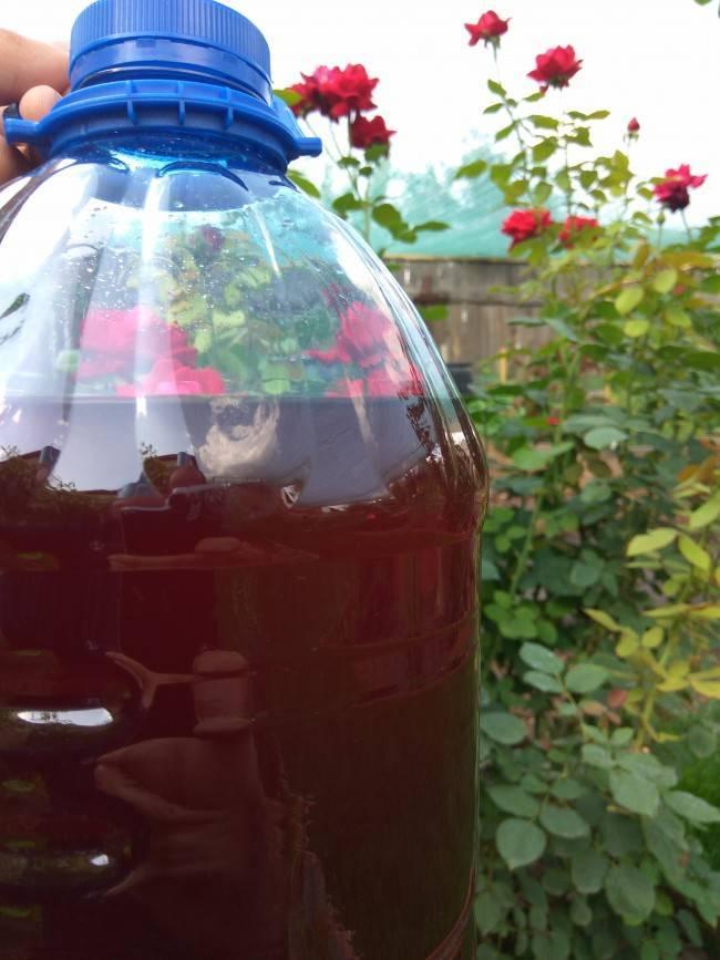 Шампанское из лепестков роз в домашних условиях