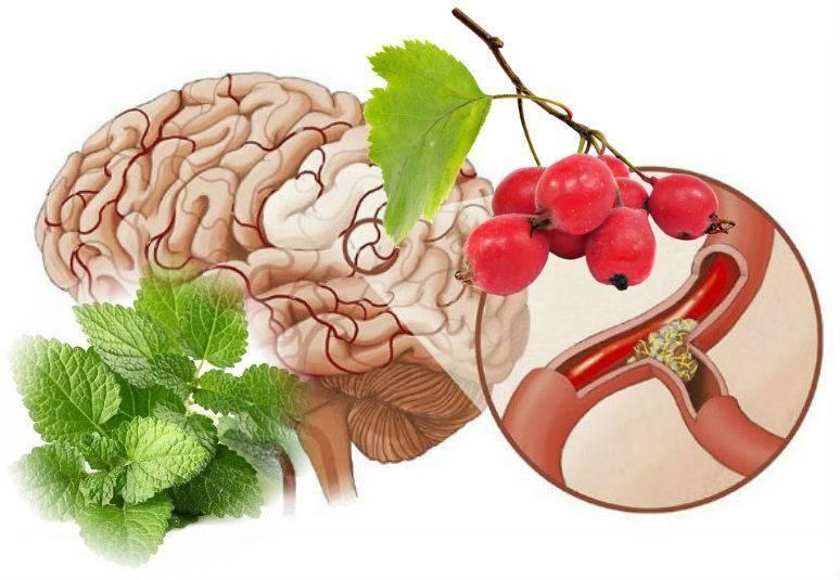 Полезные свойства гвоздики для очищения сосудов и 3 рецепта для лечения атеросклероза на ее основе