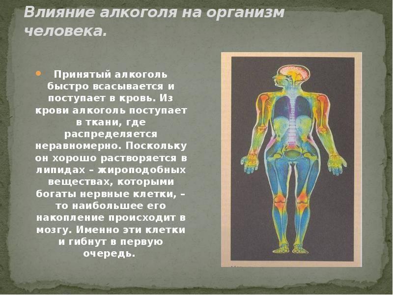 Каковы особенности влияния этанола (этилового спирта) на организм человека, чем он опасен