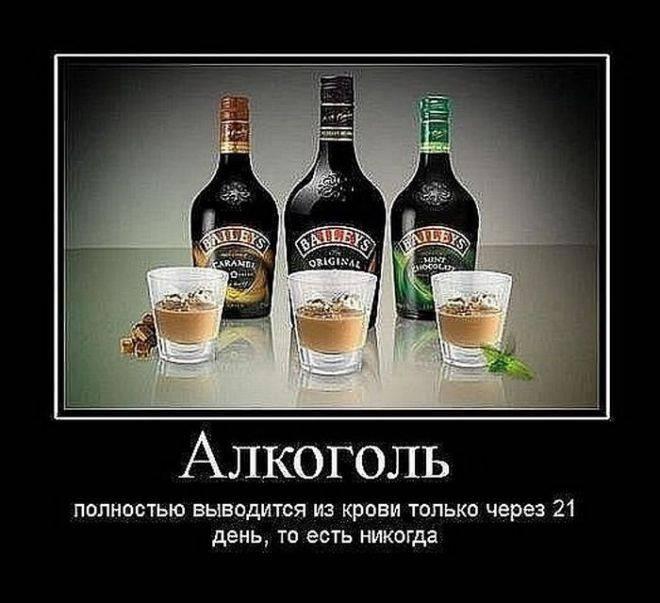 Смешные цитаты про алкоголь: 65 цитат