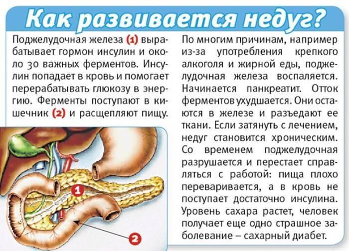 Влияние алкоголя на поджелудочную железу человека   mfarma.ru