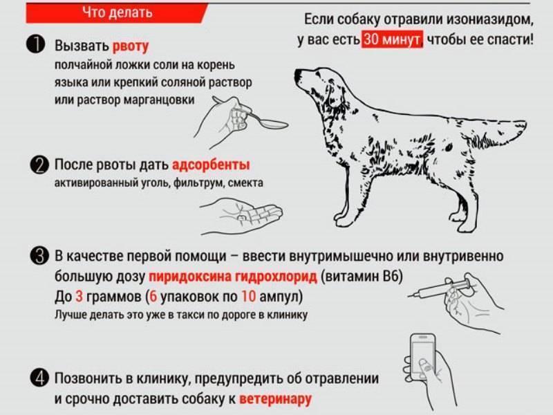 Рвота у собаки, что делать?