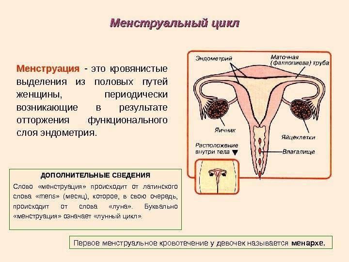 Ученые выяснили, как именно влияет на организм мужчин и женщин регулярный секс - наука - главред