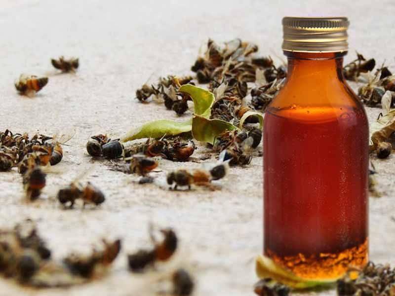 Настойка прополиса на спирту. польза и вред, применение в домашних условиях.