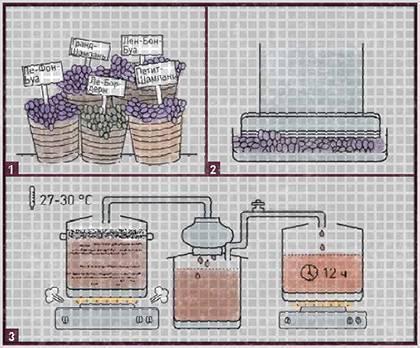 Классическая технология производства коньяка во франции