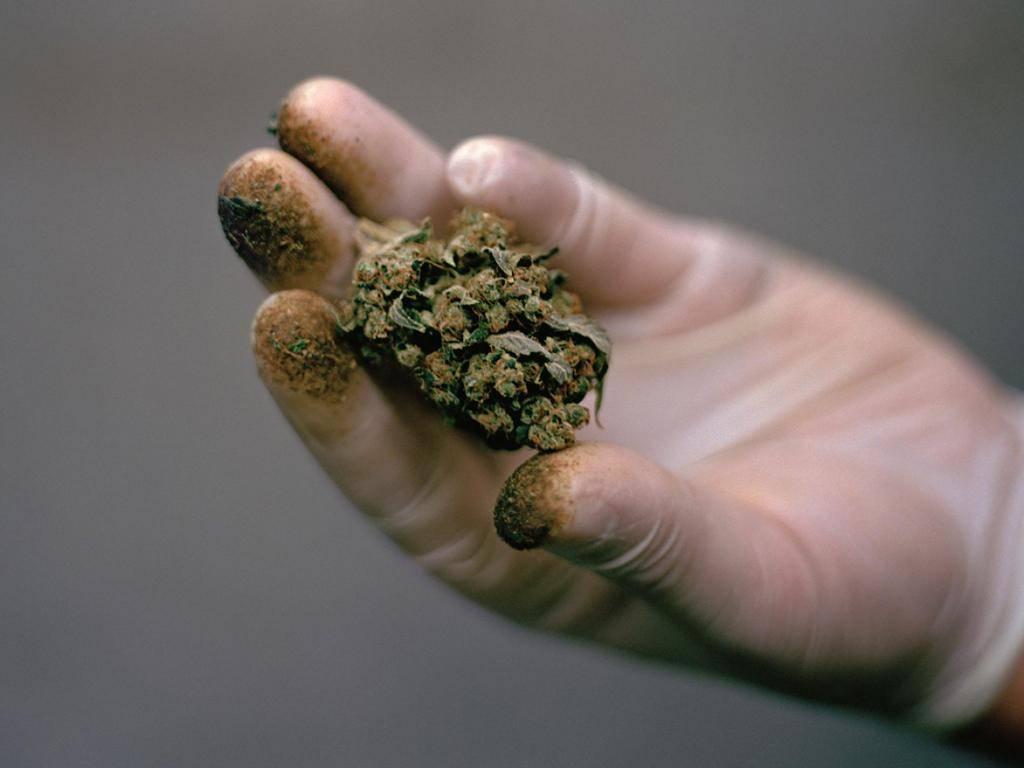 Гашиш что это: эффект и последствия употребления наркотика