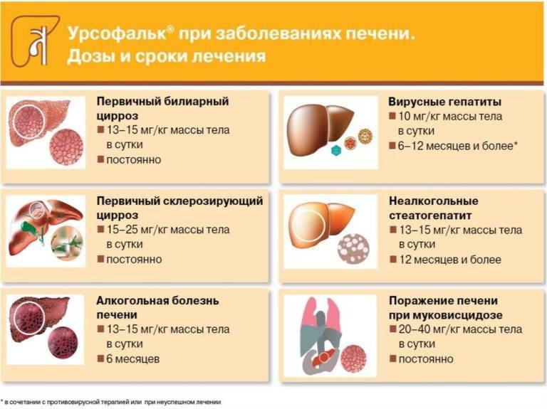 Восстановление печени после алкоголя: медикаментозная терапия и народные средства