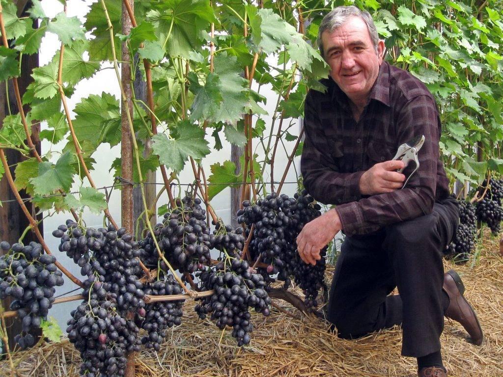 В севастополе хотят производить вино из автохтонного греческого винограда
