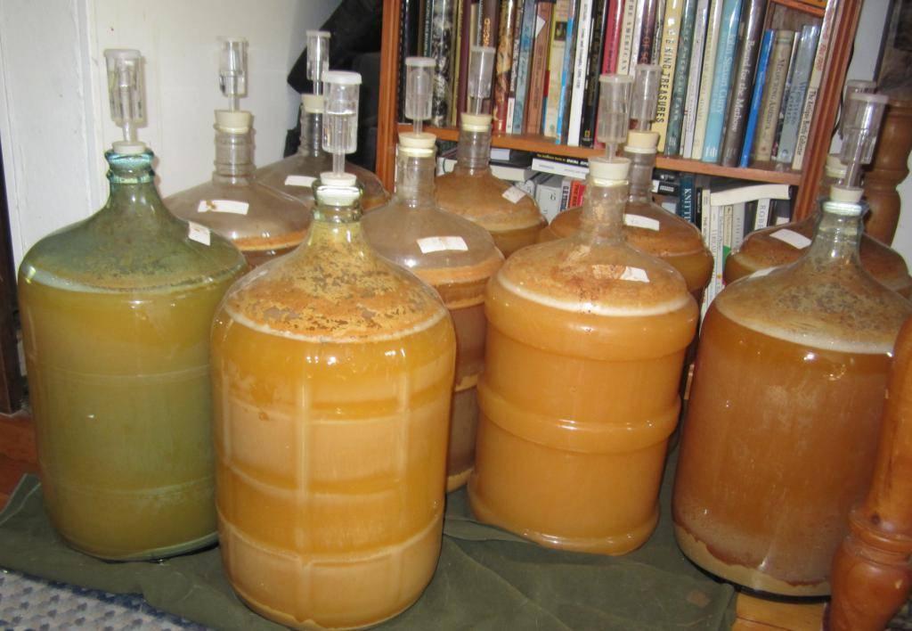 Как сделать брагу для питья из варенья, яблок, меда, фруктов