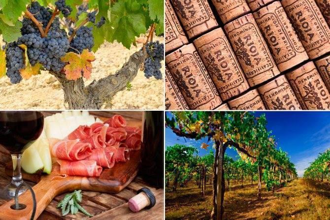 Вина в испании: классификация, сорта, регионы