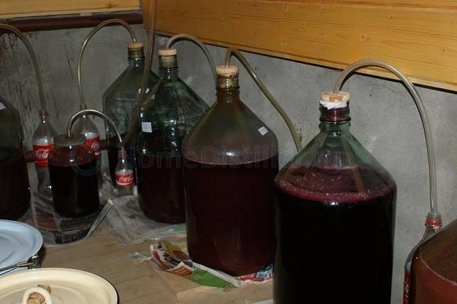Вино из терна в домашних условиях - как приготовить напиток, видео