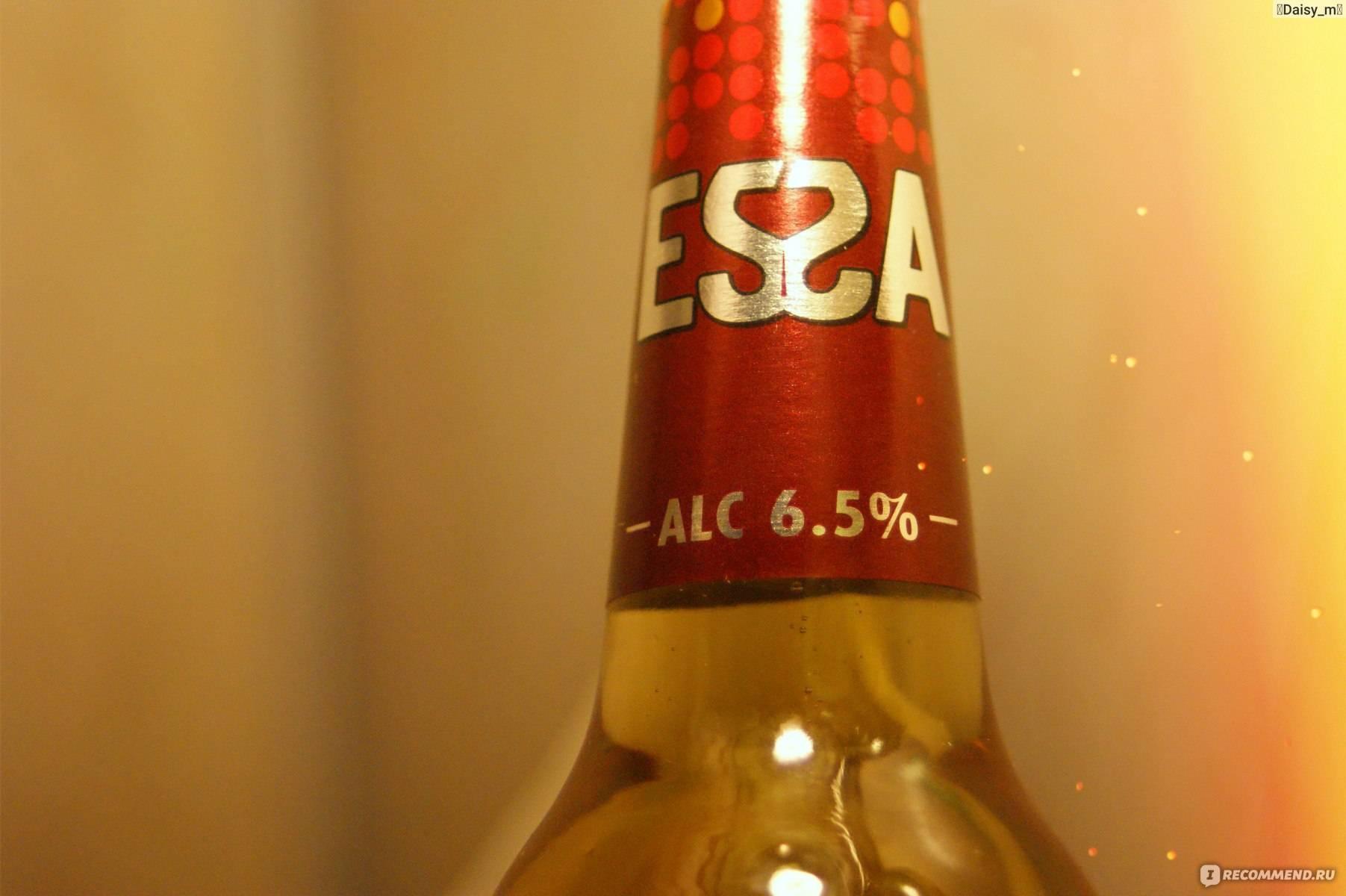 Пиво эсса и его особенности