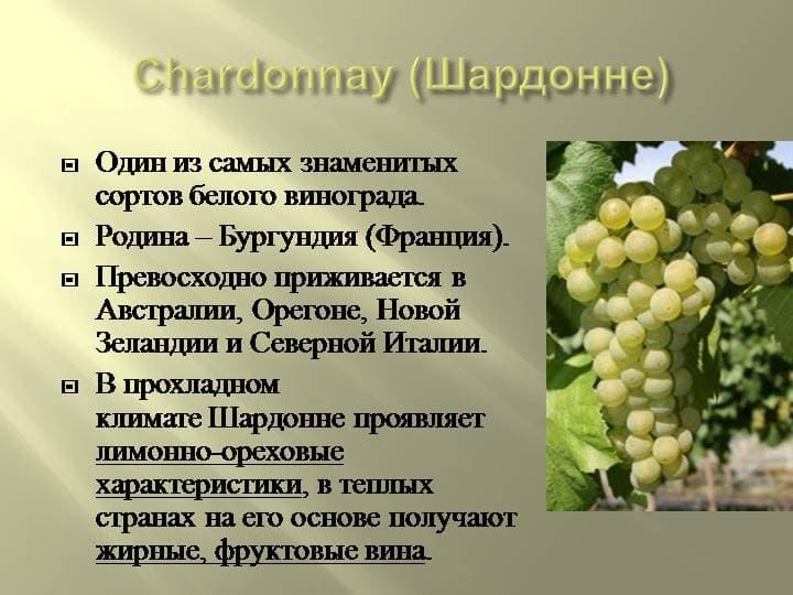 Обзор вина Шардоне Chardonnay