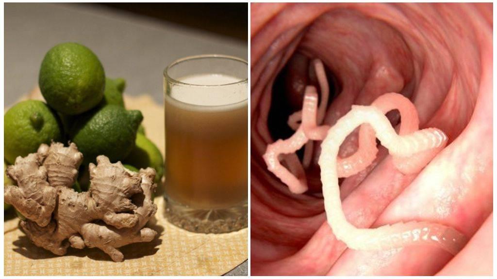 Как реагируют глисты на алкоголь - про паразитов