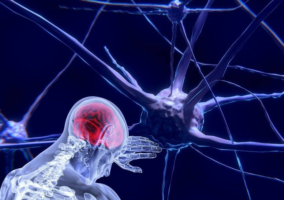 Нервные клетки восстанавливаются или нет: факты и вымыслы, мнения ученых - psychbook.ru