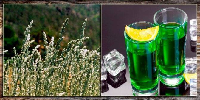 Настойка полыни на водке, спирту: рецепты