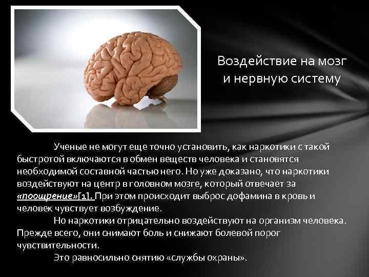 Особенности влияния алкоголя на мозг