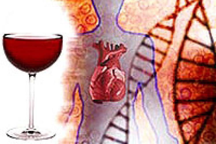 Алкоголь сужает или расширяет сосуды?