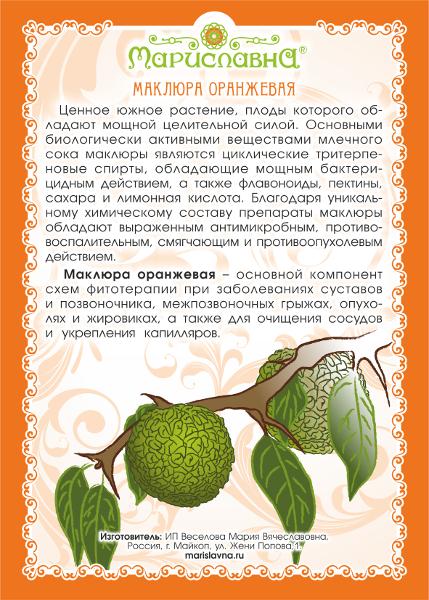 Адамово яблоко лечебные свойства и применение рецепты, как приготовить настойку от суставов, что лечит маклюра, отзывы