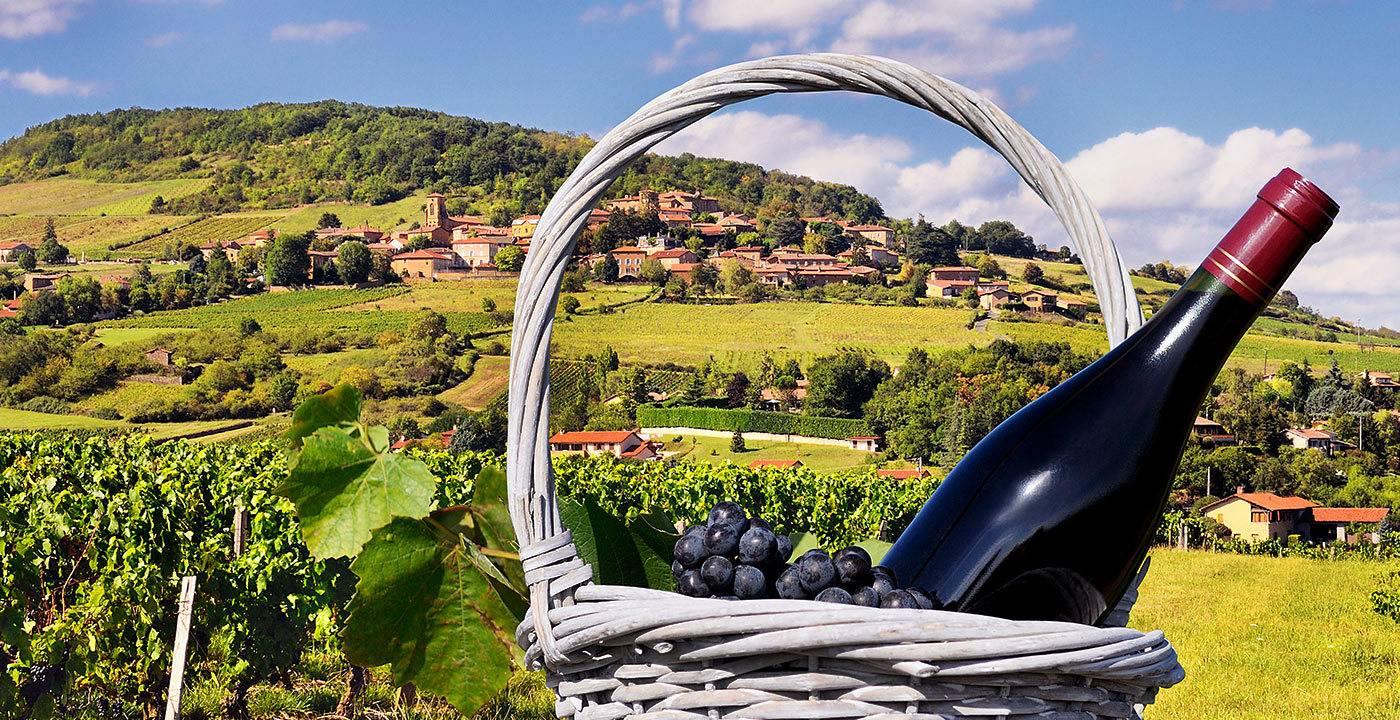 Божоле нуво: как и когда пить молодое вино&nbsp. особенности и правила употребления божоле — вина «младенческого» возраста другие варианты употребления