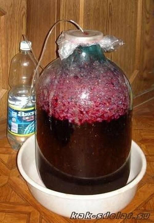Вино из винограда изабелла в домашних условиях — простой пошаговый рецепт