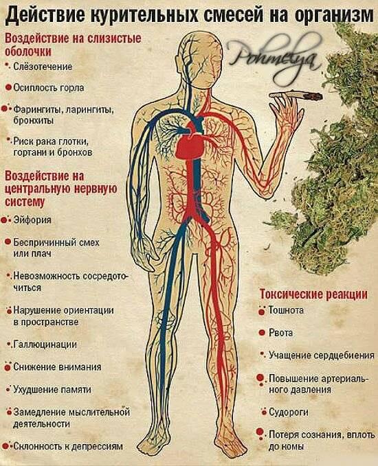 Влияние курения марихуаны на здоровье семенарния семена конопли