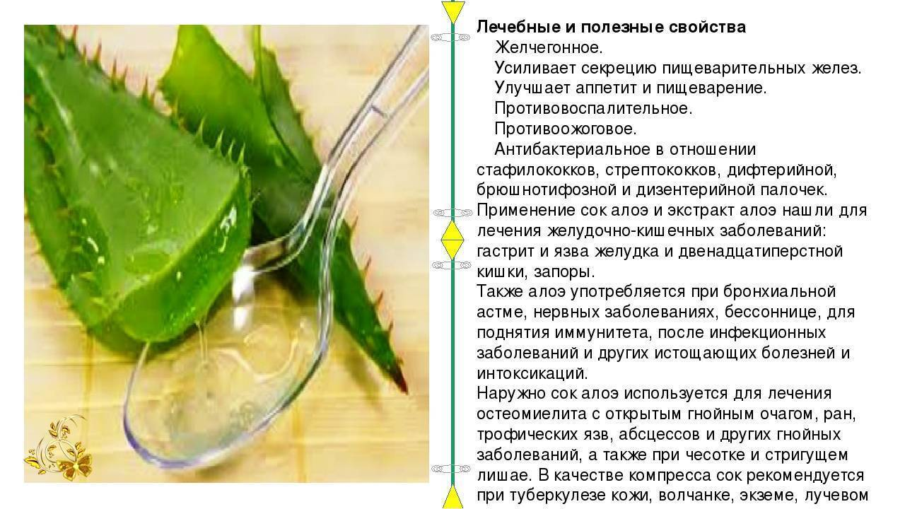Рецепты настойки с алоэ