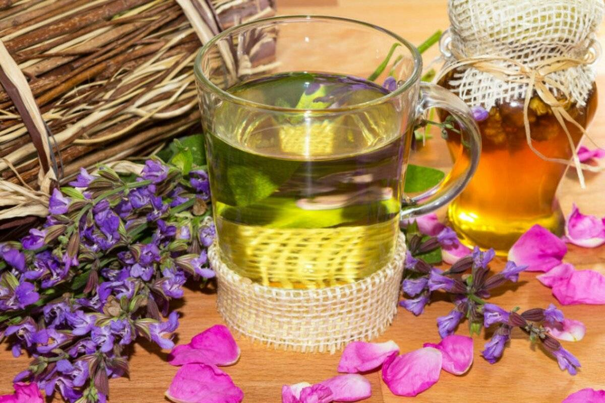 Травы от алкоголизма - рецепты народной медицины для лечения алкоголезависимых