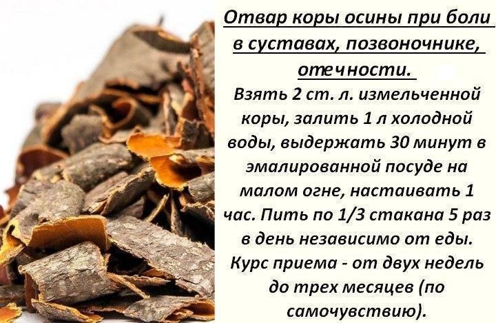 Кора осины от паразитов: лечебные свойства и рецепты