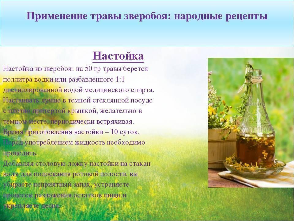 Отвар зверобоя для лечения алкоголизма: самые эффективные рецепты | medeponim.ru