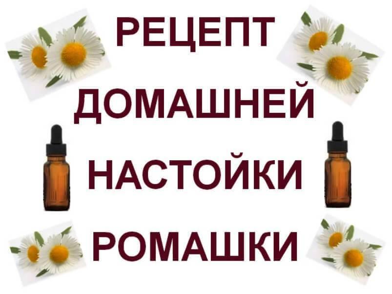 Настой ромашки: полезные свойства, применение и рецепты