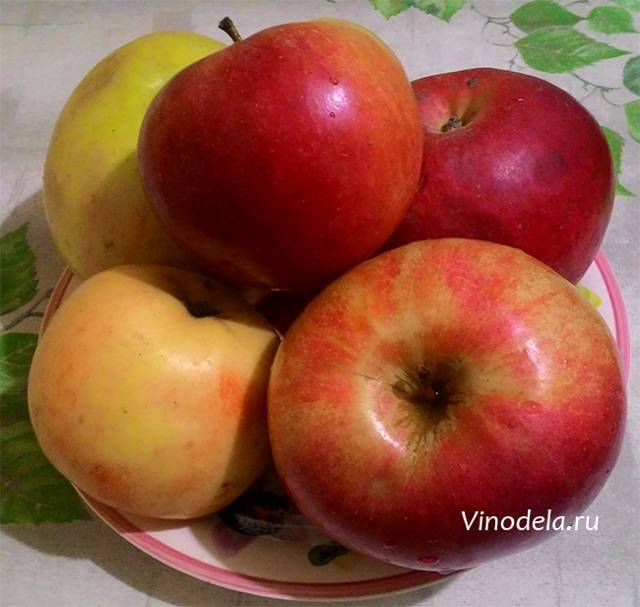 Самогон из яблок: рецепт приготовления в домашних условиях