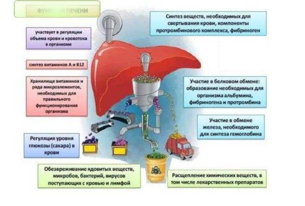 Как восстановить организм после длительного употребления алкоголя