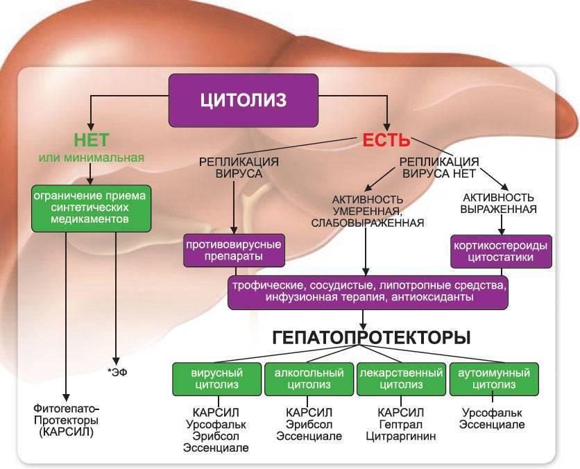 Методы лечения цирроза печени народными средствами